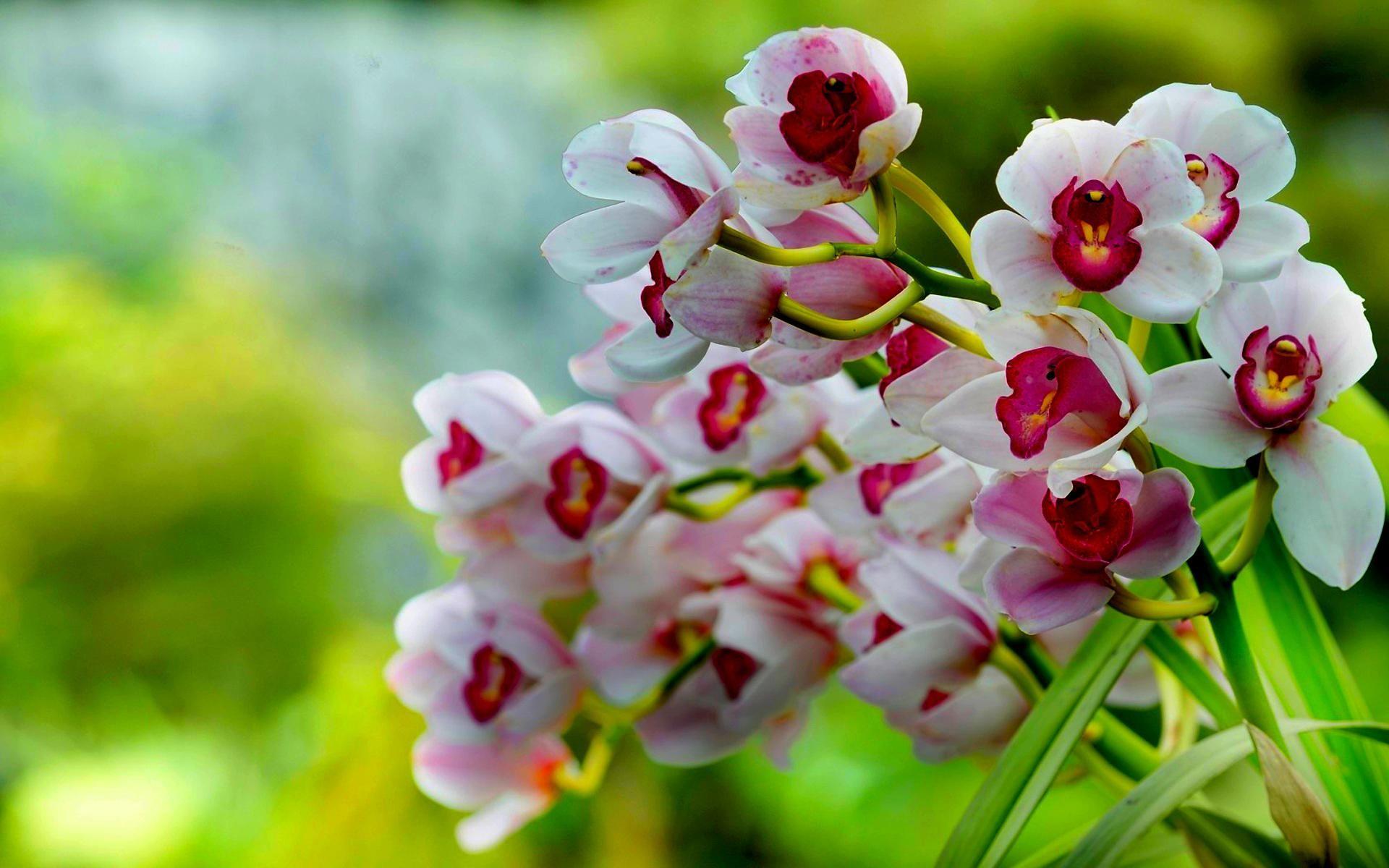 Наклейки, открытка орхидеи фото