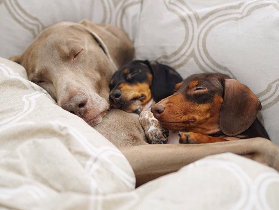 Always time to sleep pets foster puppies animals