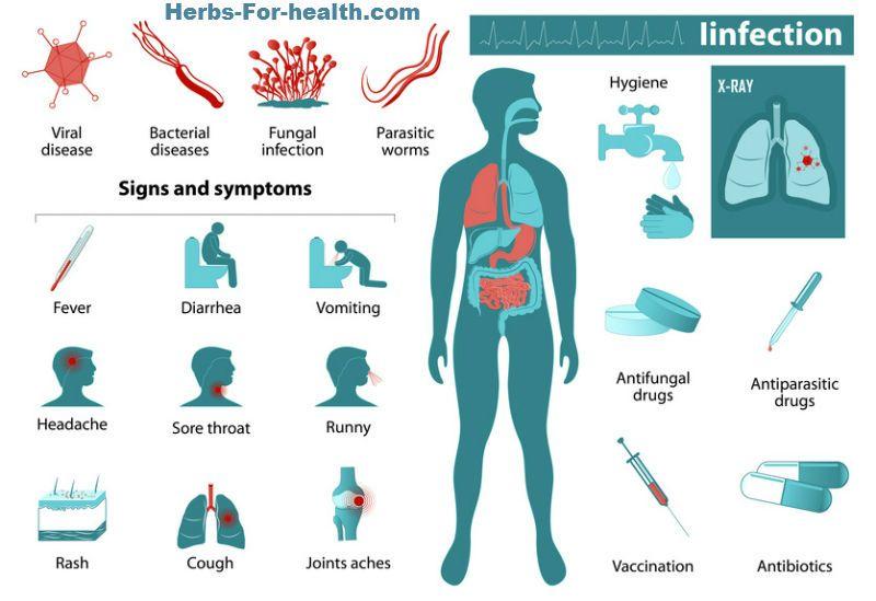 anthelmintic symptoms diagrama ciclului de viață a giardiei