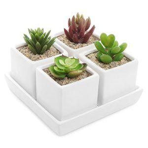 2 5 Inch Ceramic Succulent Plant Pots With Saucer Tray 4 White Cube H Ceramic Succulent Succulents Ceramic Succulent Planter