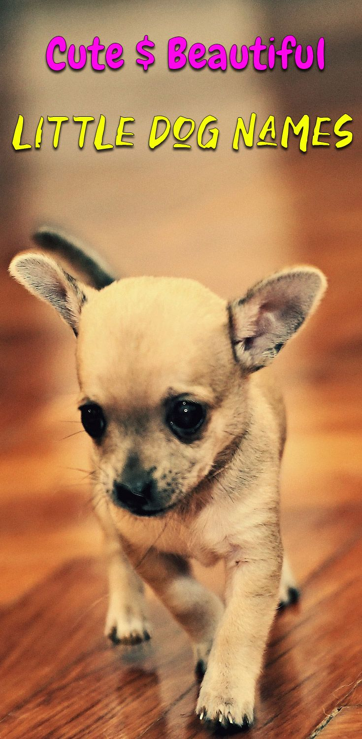 Adorable Small Dog Names 120 Ideas Which One Is Your