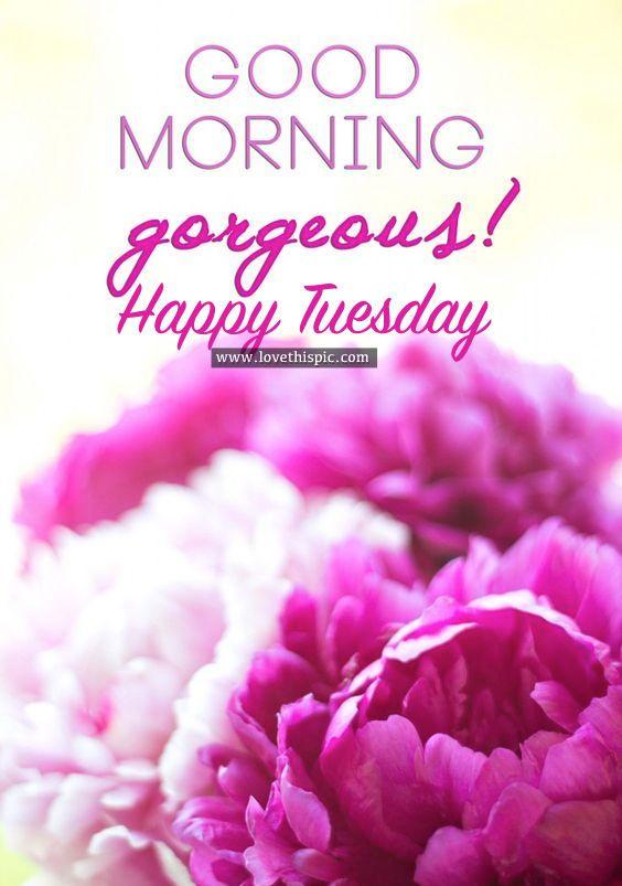 Good Morning Gorgeous! Happy Tuesday | Good morning gorgeous, Good morning  beautiful, Good morning love