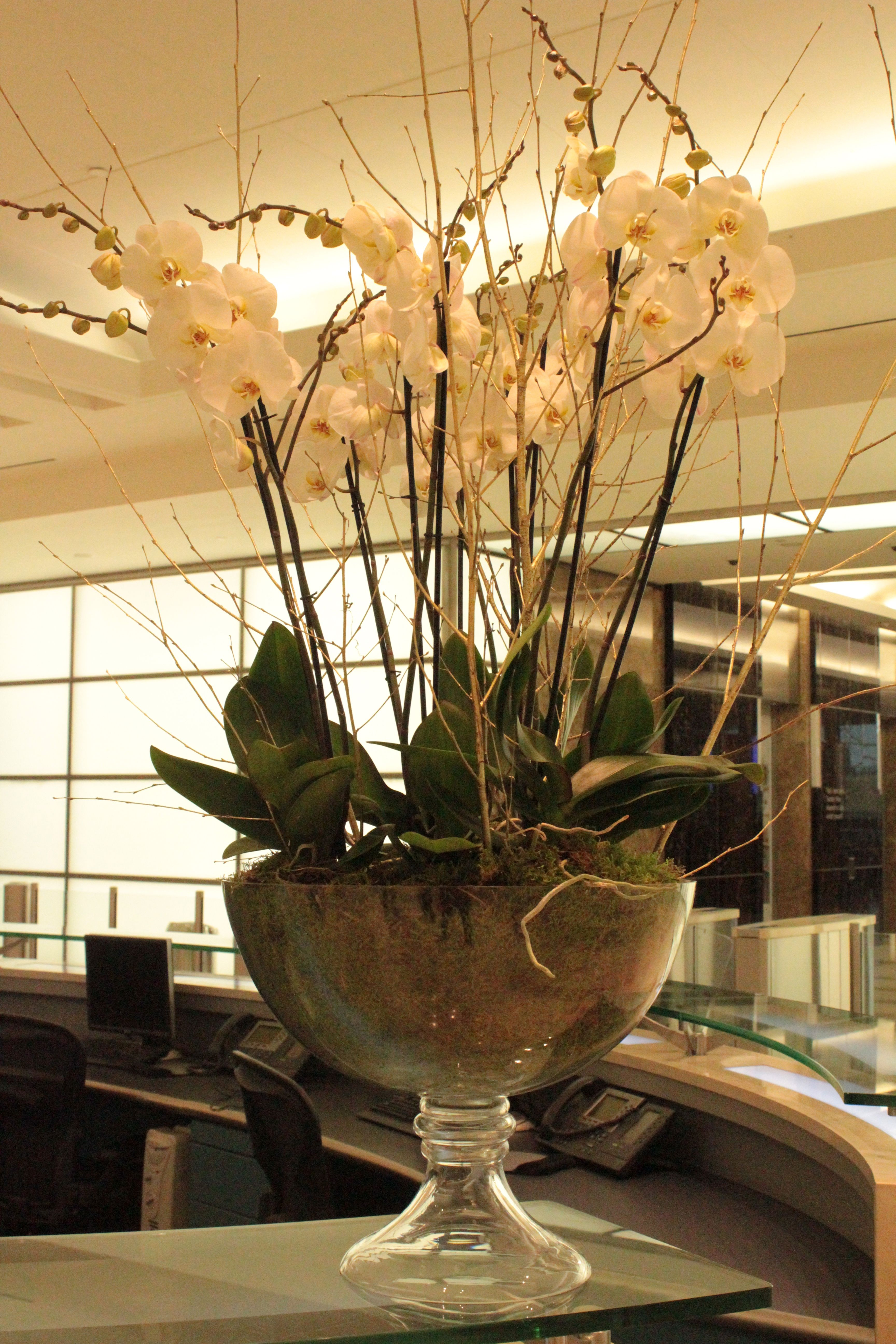 office floral arrangements tall white orchids for this corporate office floral arrangement contractflowers orchid whiteorchids office flowers contract flowers pinterest flowers floral