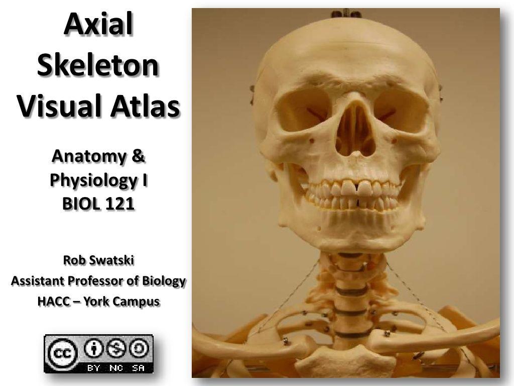 Axial Skeleton Anatomy Visual Guide | School | Pinterest | Axial ...