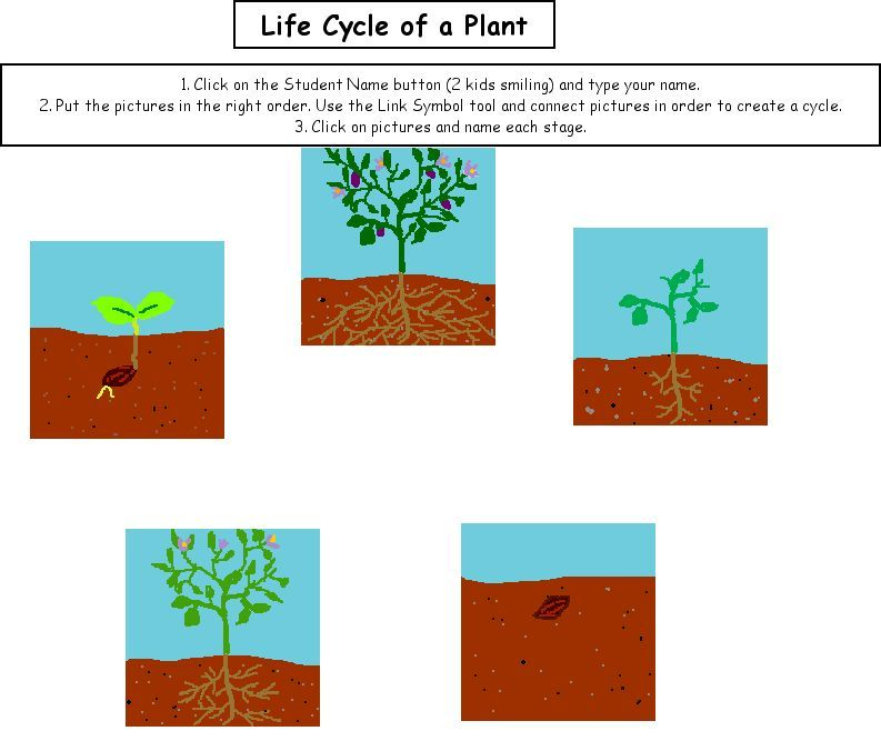 Life Cycle of a Plant – Plant Cycle Worksheet