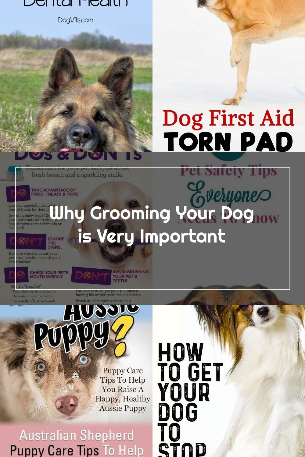 Being Diligent About Dental Care Can Save You And Your Pet Lots Of Problems Down The Road For More Helpful Pet Tips In 2020 Pet Care Tips Dog Grooming Tips Pet Hacks