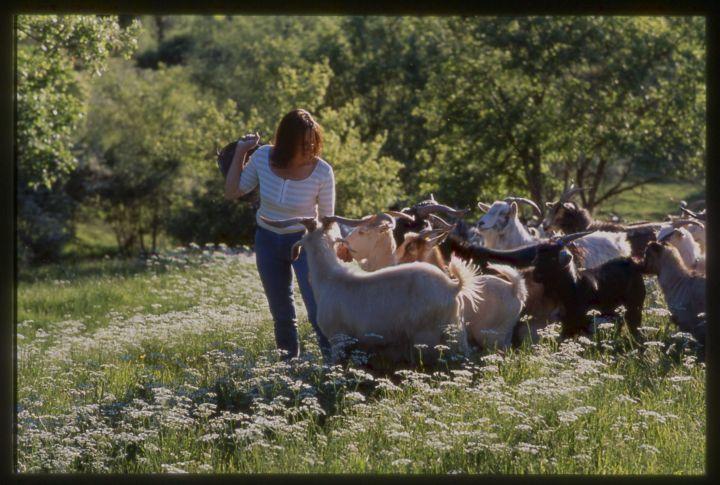 Our herd of #cashmere #goats  http://www.chianticashmere.com/RAISING-CASHMERE-GOATS/ @Nora Kravis