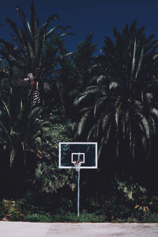 Basket Court Palms Photography Fotagrafie Fotografia Fond D
