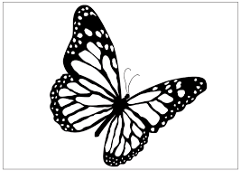 Image Result For Side View Drawing Of A Monarch Butterfly Artwork Flying Right Side Butterfly Outline Butterfly Coloring Page Butterfly Drawing