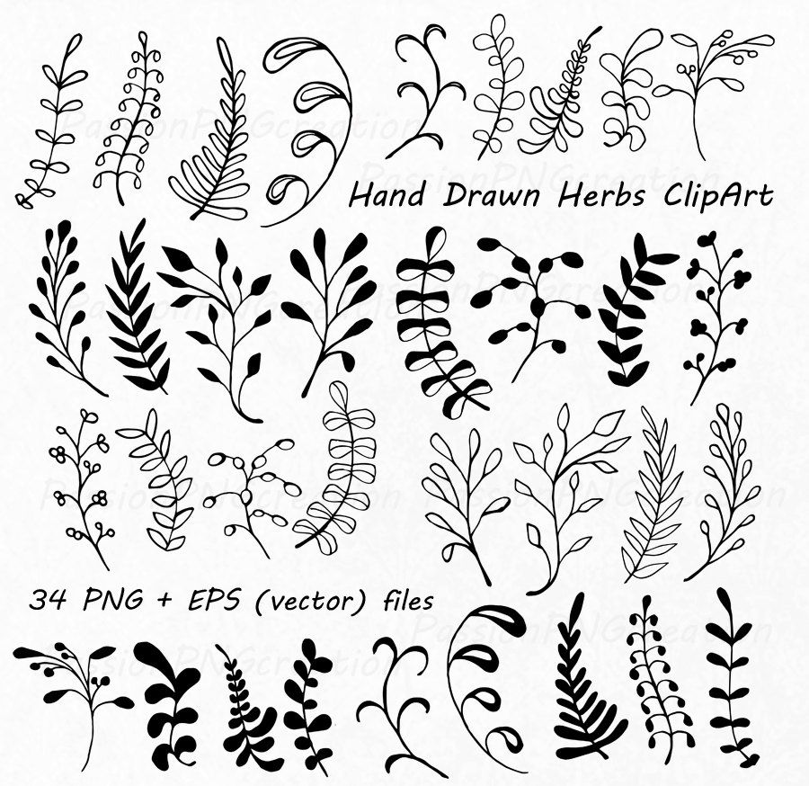 Hand Drawn Herbs Clipart, Leaves clip art, Herbs Silhouette, PNG ...