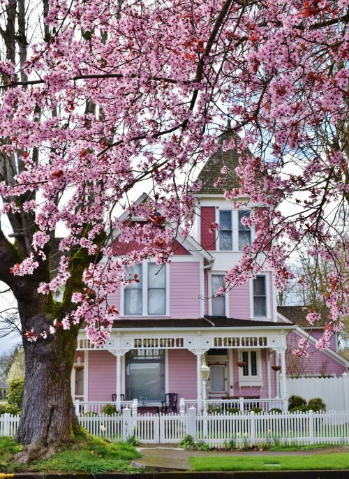Pink Victorian House Crab Le Tree In Bloom Willamette Valley