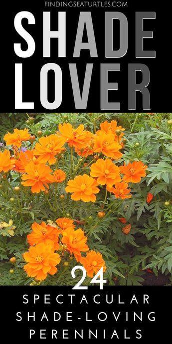 24 Spectacular Shade Garden Perennials #shadeplantsperennial