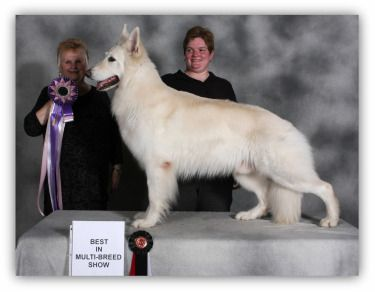 White Shepherd Atlas