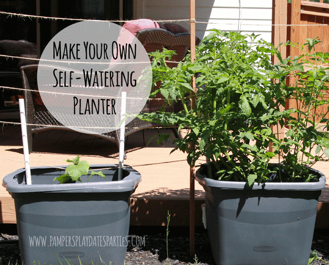 Conserve water and grow healthy vegetables by making this self-watering planter system with easy-to-find materials and only one afternoon.