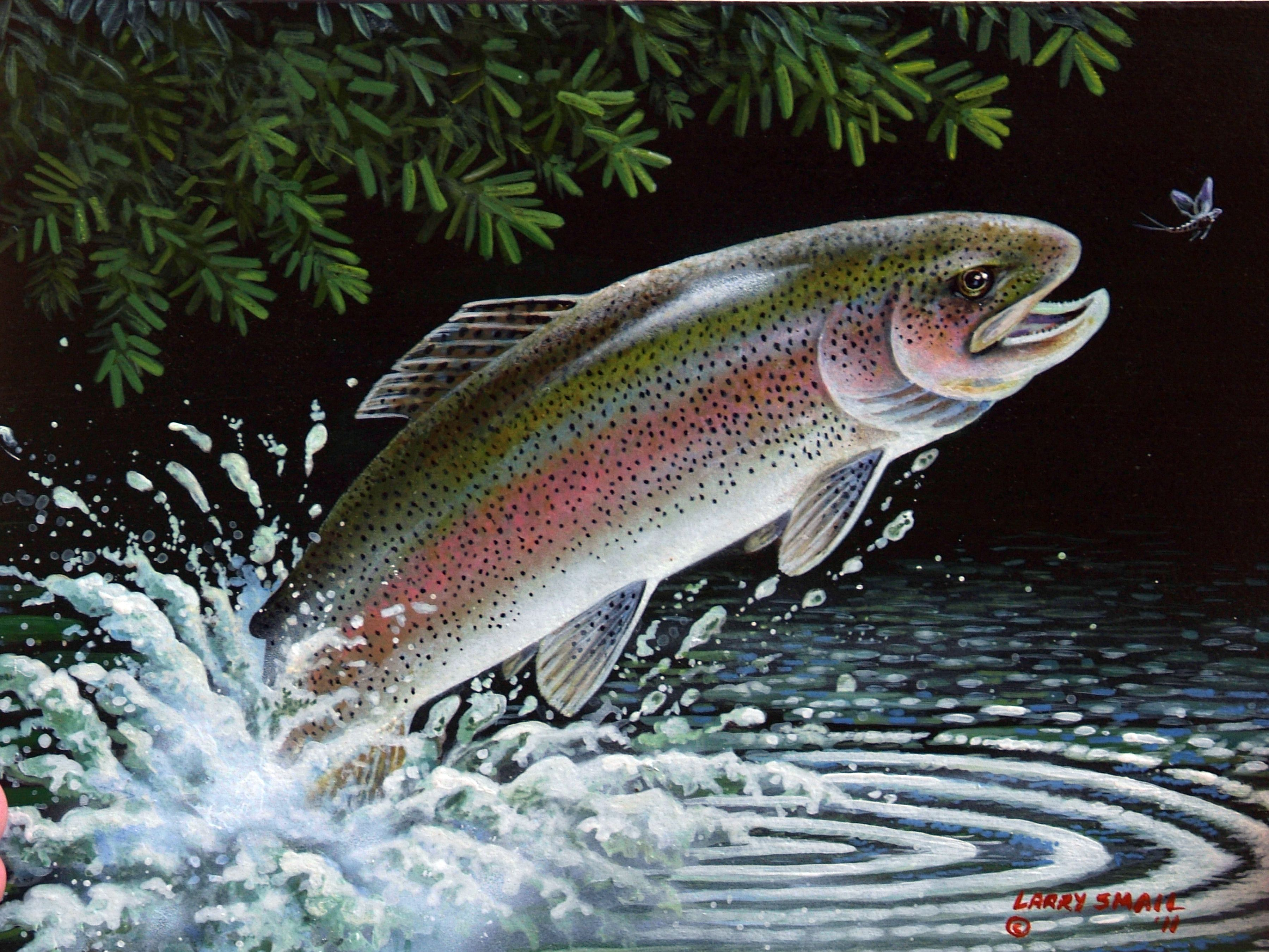 Rainbow Trout Painting Images & Pictures - Becuo | Trout ...