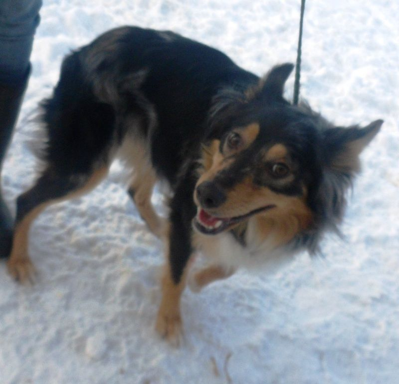Adopt Zoe On Petfinder Australian Shepherd Dogs Dog Adoption Dogs