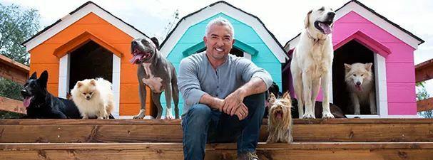 Cesar Millan met een aantal honden van zijn roedel.