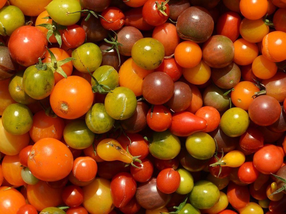 Verbotene Tomatensorten