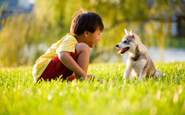 Husky Frases: Las 24 Fotos Más Adorables De Internet De Perros En