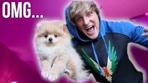 Image result for logan paul and dog