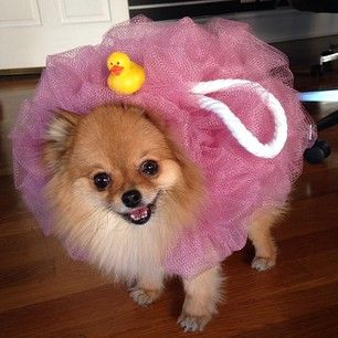 Zoila the loofah. | Community Post: 15 Precious Dogs Who Are Way Too Excited For Halloween
