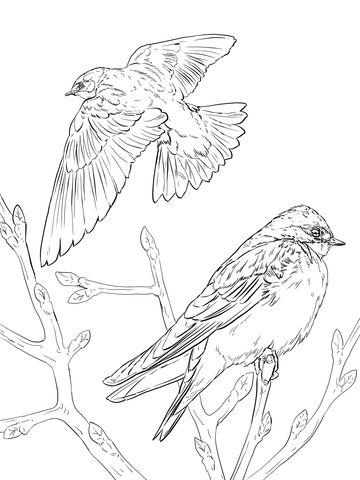 Hirondelles bicolores réalistes Coloriage | Colouring Pages ...