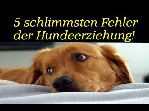 5 Fehler der Hundeerziehung Hunde & Welpen richtig