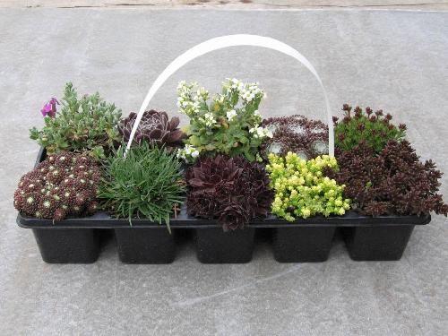 BAZÁR | Skalničkový mix 10pack | Obchod rastlín - Brest.sk