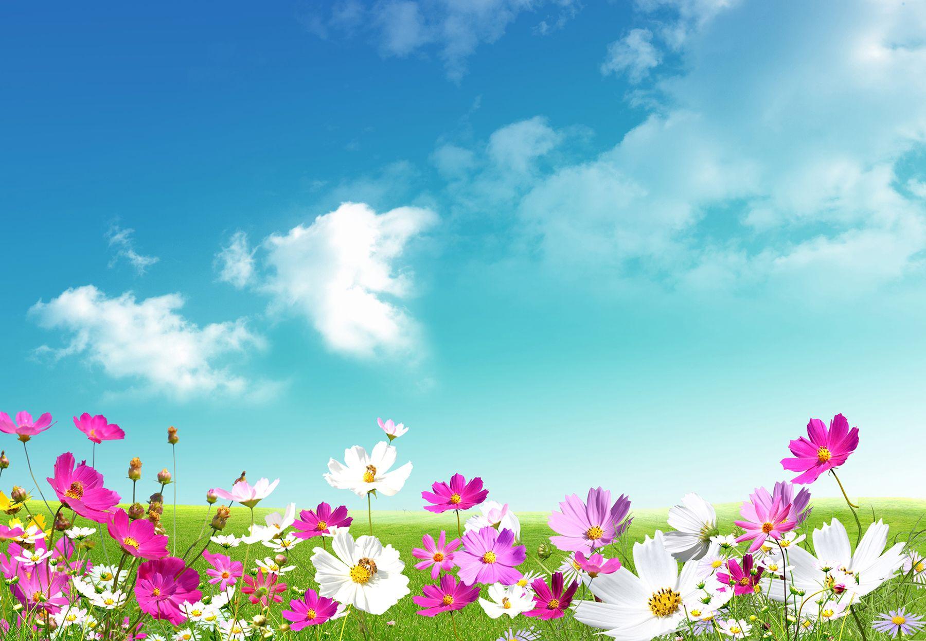 Spring Spring Desktop Wallpaper Nature Desktop Wallpaper Spring Wallpaper