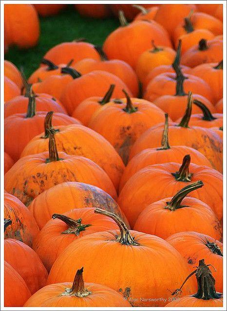 Pumpkins Pumpkin Pumpkin Colors Color