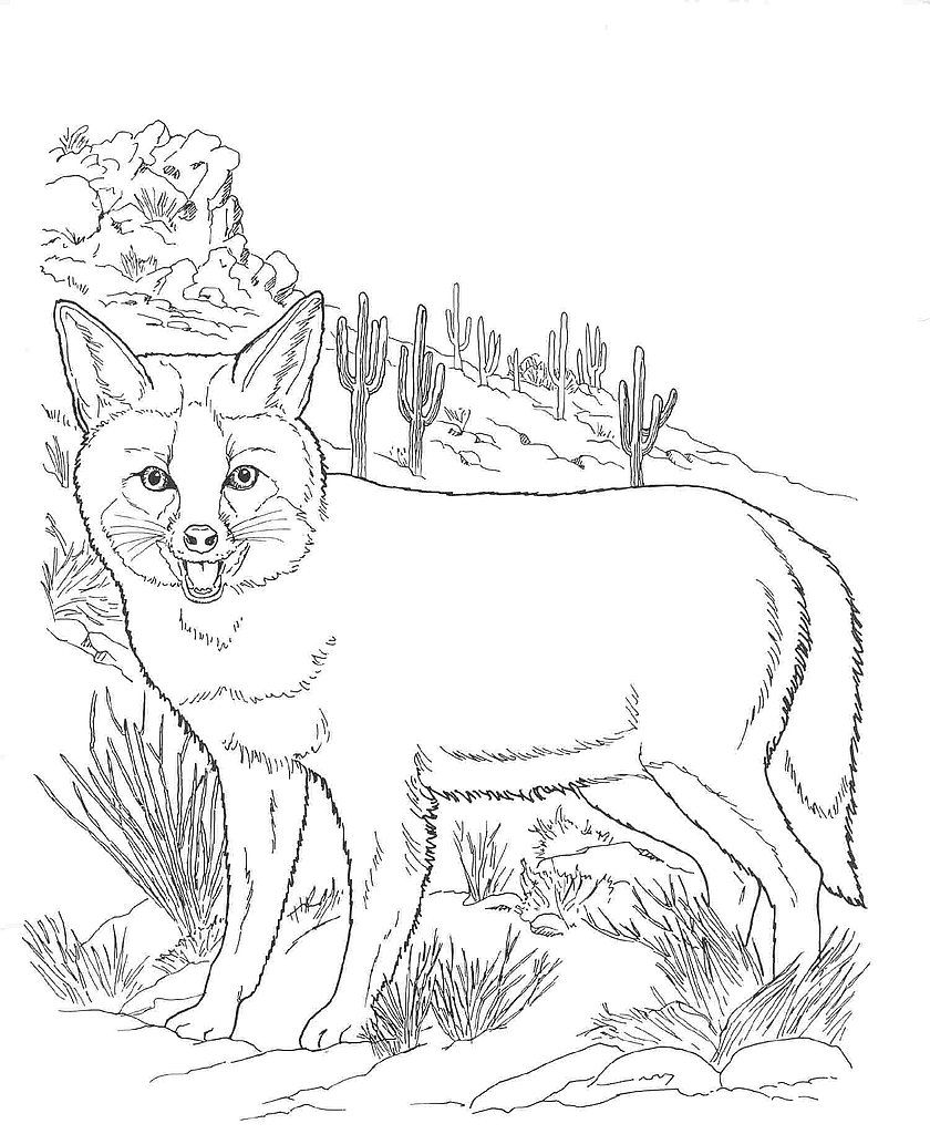 Desert Animals Coloring Pages | Desert Animals Coloring Pages : Kit Fox