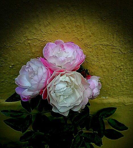 Las flores de mi jardín