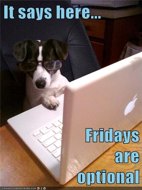Identity Theft Resource Center Toll Free No Cost Assistance At 888 400 5530 Friday Dog Dog Quotes Funny Funny Dog Memes
