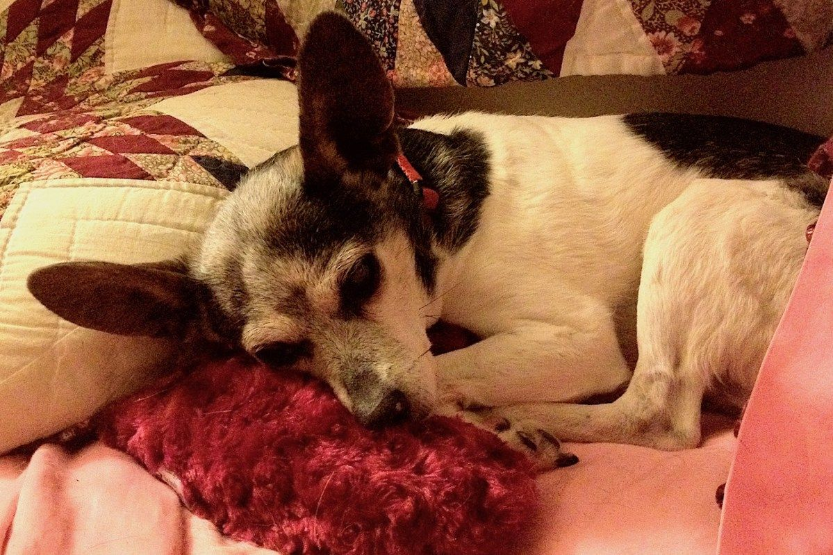 Euthanizing my dog with dementia the dreaded choice