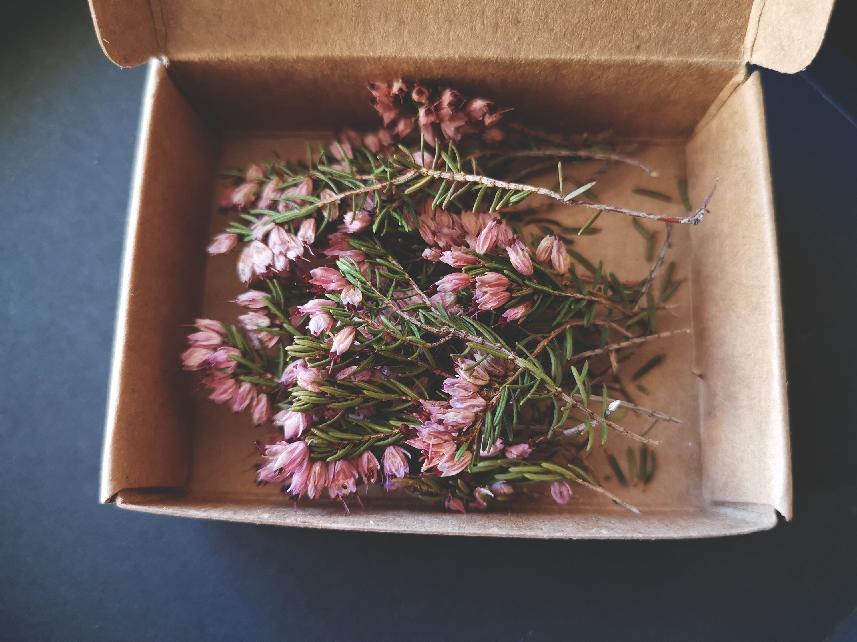 25 Pieces Dried Heather Dried Pink And White Heather Wild Dried Heather For Crafting 25 Pieces Pack Dried Flower Petals Dried Plants In 2020 Flower Petals Dried Flowers Dry Plants