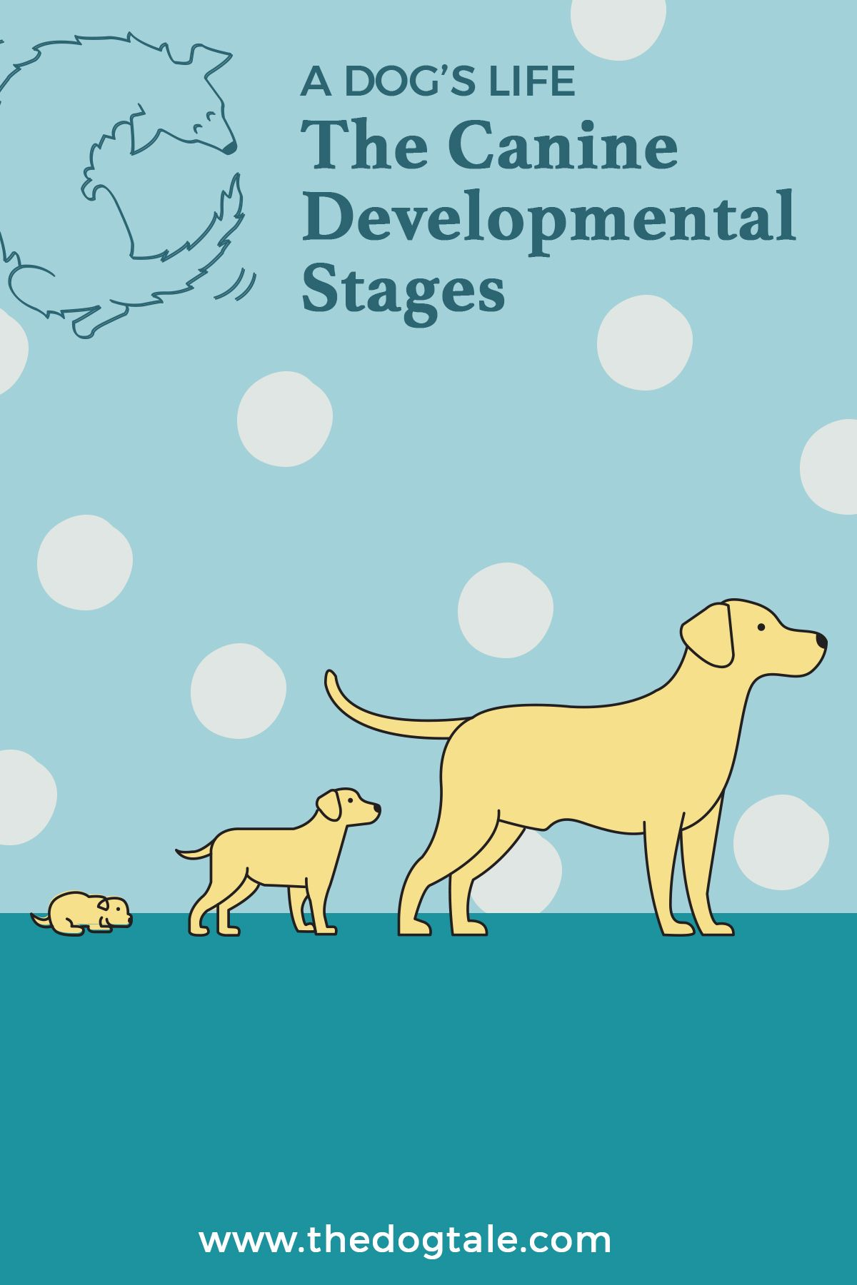 A Dog's Life The Canine Developmental Stages in 2020