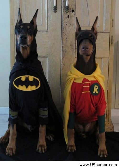 Batman dog funny US Humor - Funny pictures, Quotes, Pics, Photos, Images on imgfave