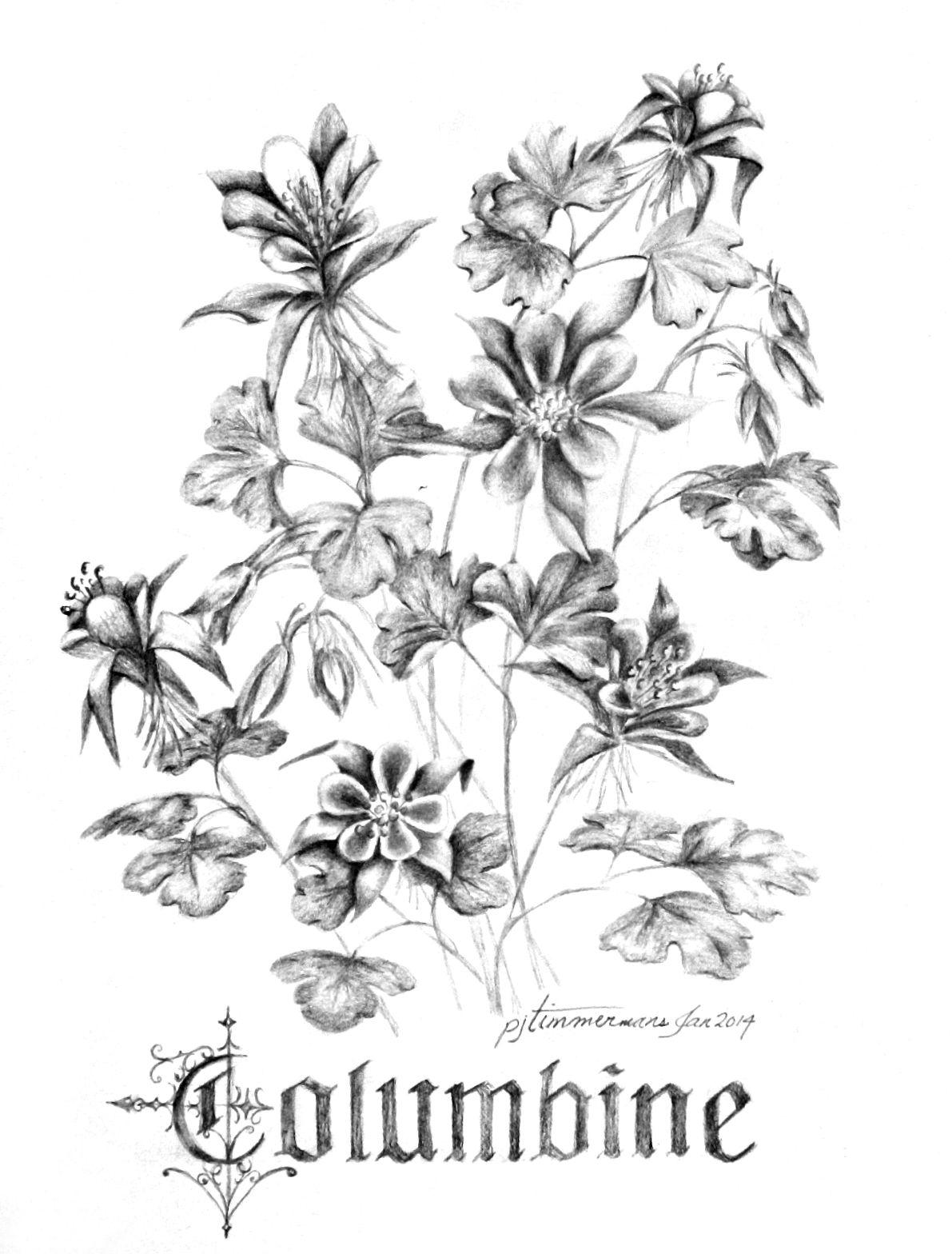 Columbine flowers luv2draw ink pinterest tattoo and tatting columbine flowers luv2draw izmirmasajfo