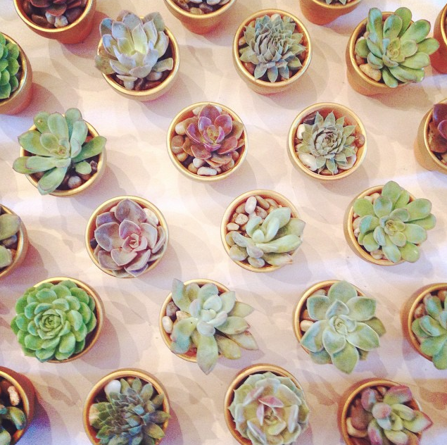 Mini Succulents In Gold Rimmed Terra Cotta Pots Need These For New Bedroom Mini Succulents Mailbox Decor Bright Decor