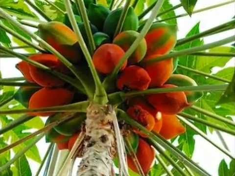 Most Expensive Fruit In kerala22 Fruits of Kerala  tast of