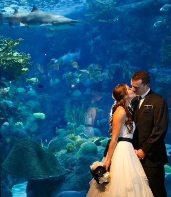 I like that the photographer caught the shark in the background in this aquarium wedding photo.