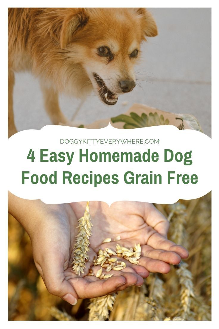 4 Easy Homemade Dog Food Recipes Grain Free-- If your dog has diseases, allergies, age-related illnesses, and pains, you have to adapt the food for your dog. Discover 4 easy homemade dog food recipes grain free now. #dogfood #doghealth #homemade #recipes
