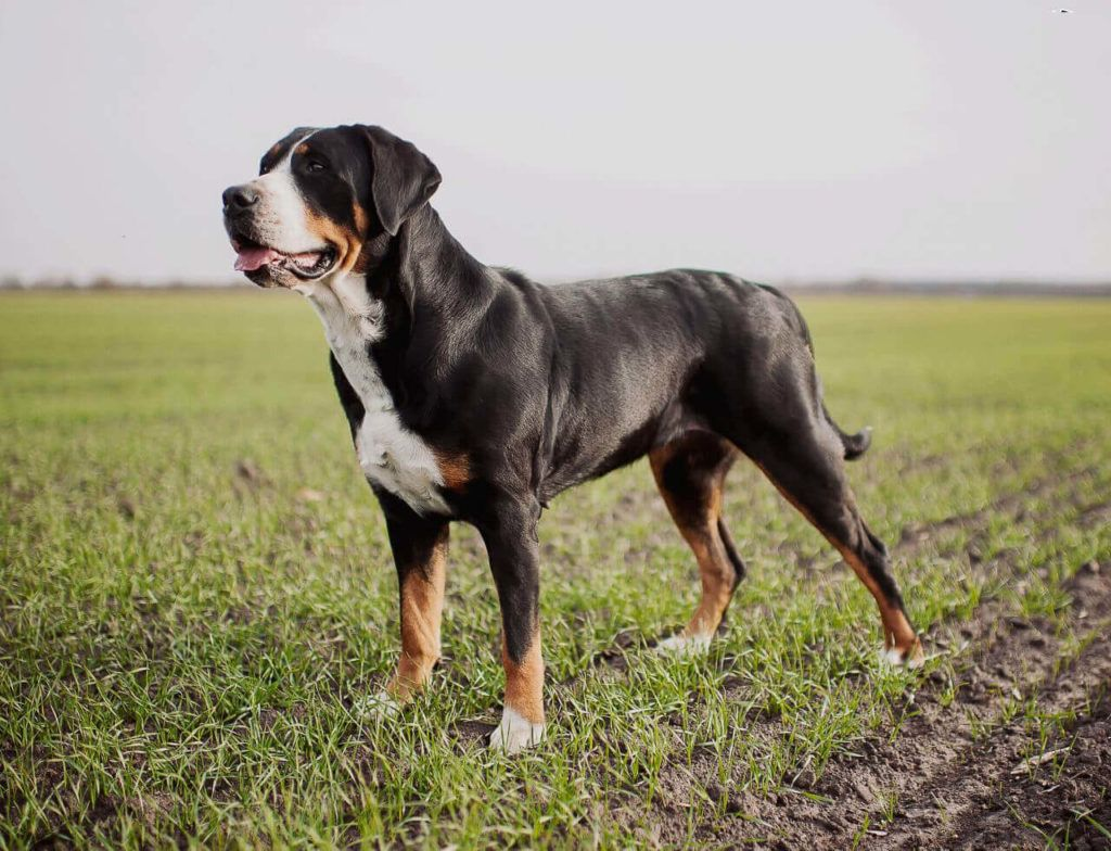 Top 25 Strongest Dog Breeds In The World In 2020 Dog Breeds
