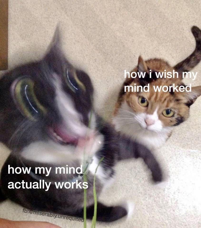 Pin By Dakota Douglas On Funny Memes In 2020 Funny Cat Memes Cat Memes Funny Cat Pictures