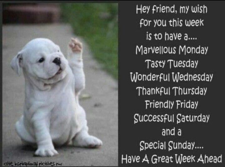 Have A Great Week Great Week Wonderful Wednesday Good
