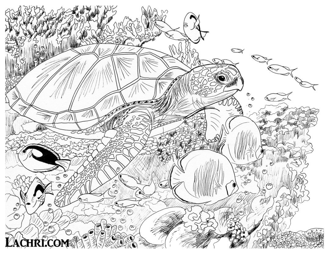 Color this sea turtle underwater scene yourself in my free adult