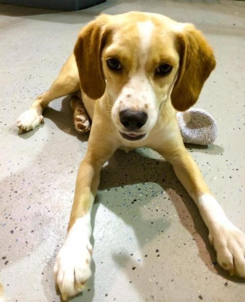 Adopt Annie In Ct On Petfinder Yellow Labrador Retriever Puppy Adoption Dog Adoption