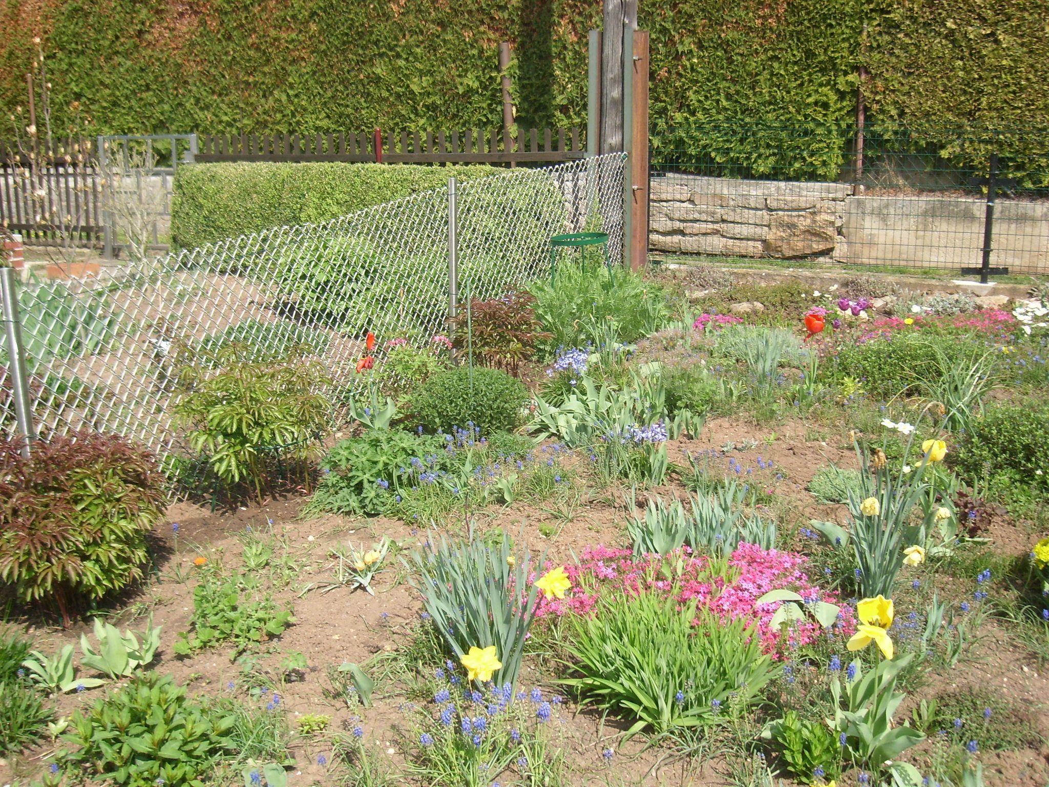 auf der linken Seite am Zaun zwischen den Pfingstrosen sind die Samen aus Tütchen 3 ausgesät ;-)
