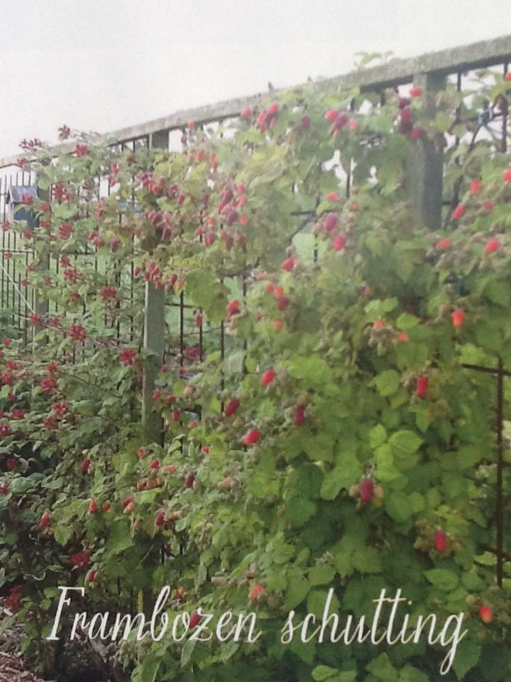 Schutting of afscheiding met frambozen erfafscheiding for Tuinontwerp eetbare tuin