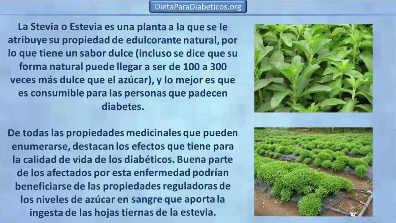 Stevia sirve para bajar de peso